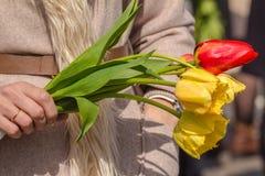 Hand för kvinna` som s rymmer en tulpan Royaltyfri Fotografi