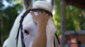 Hand för kvinna` som s slår den vita hästen arkivfilmer