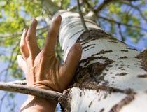 Hand för man` s på ett träd i naturen Royaltyfri Foto