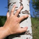 Hand för man` s på ett träd i naturen Arkivfoto