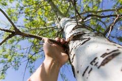 Hand för man` s på ett träd i naturen Royaltyfri Bild