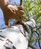 Hand för man` s på ett träd i naturen Royaltyfria Foton