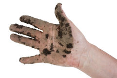 Hand of the  farm laborer Royalty Free Stock Image