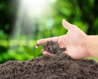 Hand of farmer growing and nurturing tree growing on soil Royalty Free Stock Photography