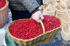 Hand farmer wick basket mossberry market ecologic Royalty Free Stock Photos