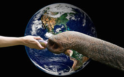 A hand feeding food to elephant with the earth ,including elements Stock Photography