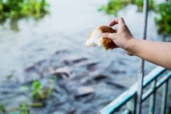 Hand feeding food to fish Stock Photos