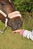 Hand feeding horse Stock Photo