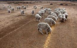 Hand feeding sheep Stock Photo