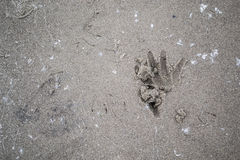 Hand And Finger Markings In The Sand. Photo of hand and finger markings in the sand on the beach early in the morning. Photograph taken at Long Point Beach in Stock Photos