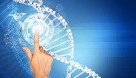 Hand finger presses on model of DNA Stock Image