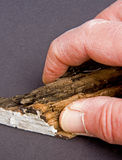 Hand and fingers  holding rotten timber. Royalty Free Stock Photos