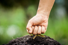Hand fist smashed the young tree Stock Images