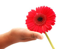 Hand with flower Stock Image