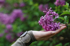 Hand and flower. Lady's hand with lilac flower stock images