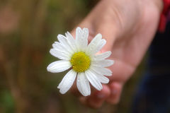 Hand and flower. Give flower and promote peace royalty free stock photography