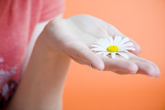 Hand with flower Royalty Free Stock Images