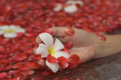 Hand with flower. Hand holding flower and petals Stock Photography