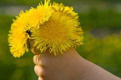 Hand with flower Stock Photography
