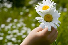 Hand with flower Stock Photos