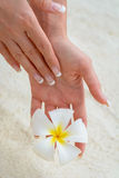 Hand Flower Stock Photography