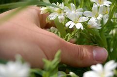Hand with flowers Stock Photography