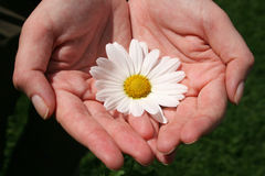 Hand and Flowers Royalty Free Stock Images