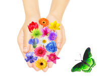 Hand and flowers Stock Images
