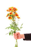 Hand with flowers isolated Royalty Free Stock Photo