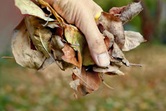 Hand with Foliage Royalty Free Stock Images