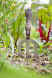 Hand Fork in Vegeteable Patch Stock Photo