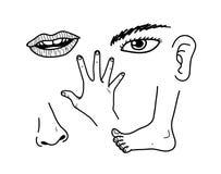 Hand fot, näsa Fotografering för Bildbyråer