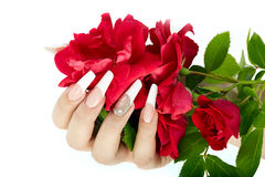 Hand with french manicure holding a red rose flower Stock Image