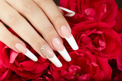 Hand with french manicure and red roses Stock Image