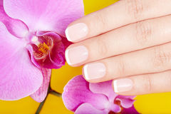 Hand with french manicured nails and orchid flowers Stock Photos