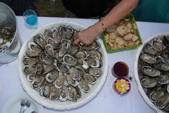 Hand on Fresh Shucked Oysters with Served as Appetizer Stock Image
