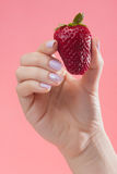 Hand with a fresh strawberry Stock Images