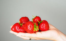 Hand full of big red fresh ripe strawberries. Towards gray colored backdrop Stock Photography