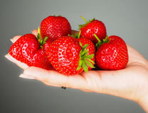 Hand full of big red fresh ripe strawberries. Towards gray colored backdrop Stock Photos