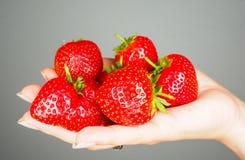 Hand full of big red fresh ripe strawberries towards gray. Hand full of big red fresh ripe strawberries isolated towards gray colored backdrop stock photos