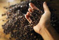 Hand full of coffee bean. With mood lighting Stock Image