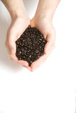 Hand full of coffee beans Stock Photo