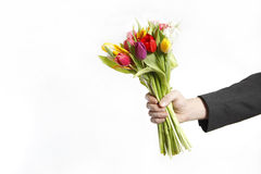 A hand full of colorful tulips Royalty Free Stock Photo