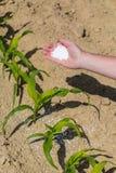 Hand full of fertilizer Stock Photo
