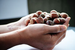 Hand full of hazelnuts Royalty Free Stock Photography
