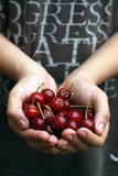 Hand full of ripe cherries Royalty Free Stock Images
