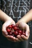 Hand full of ripe cherries Royalty Free Stock Images