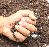 Hand full of soil against white background Royalty Free Stock Photo