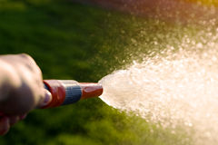 Hand with garden hose. Water spray - gardening royalty free stock photo