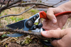 Hand with garden pruner Royalty Free Stock Image